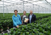 Price for Hydrangea nursery Slingerland