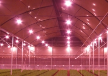 Growers using LED, light years ahead